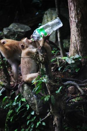 Singe buvant de l'eau dans une bouteille en plastique